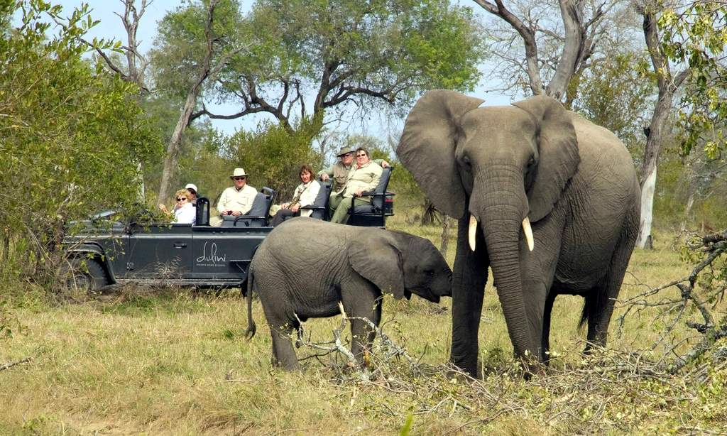 https://www.sportif.travel/images/uploads/Tours/Kruger%20Safari%20Wild%20Wings/kruger_game_drive_elephants.jpg