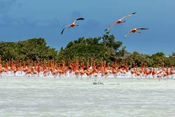 Bonaire Windsurf, Kitesurf, SUP, Kayak holiday. Eco tours to see Flamingoes.