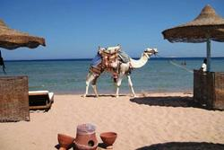 Safaga - Red Sea.